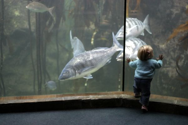 tiny person or huge fish?