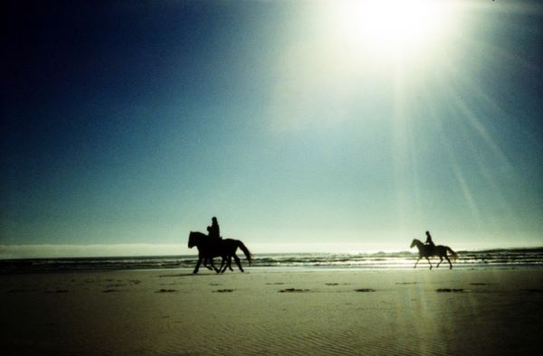horses on noordhoek beach